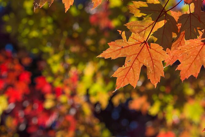 How To Keep Leaves From Blowing Into Your Garage